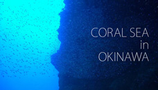 【4K】CORAL SEA in OKINAWA